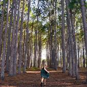 Gold Coast - Pizzey Park (Pine Forest)